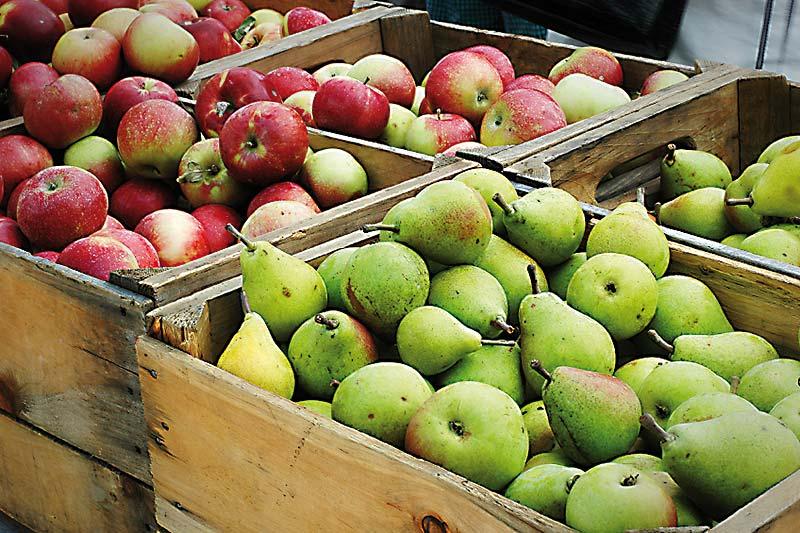 Aus Obst wird Saft