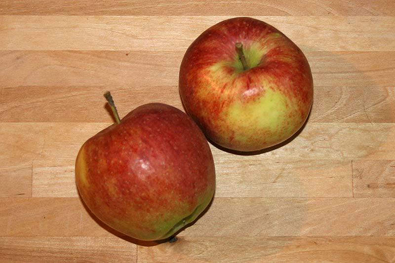 Apfelsorte Jonagored