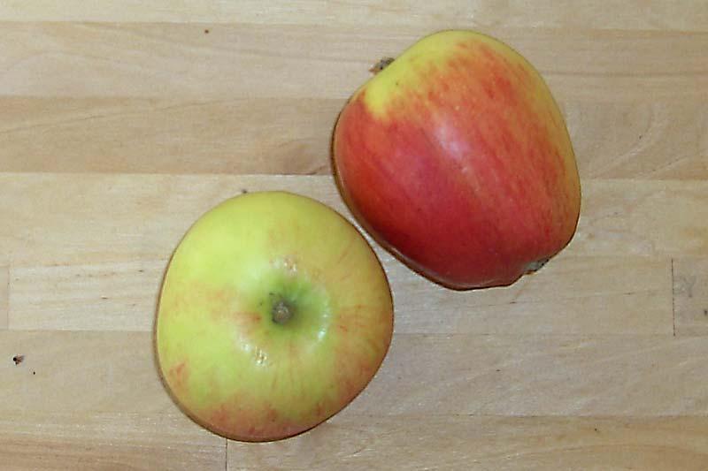 Apfelsorte Pirol