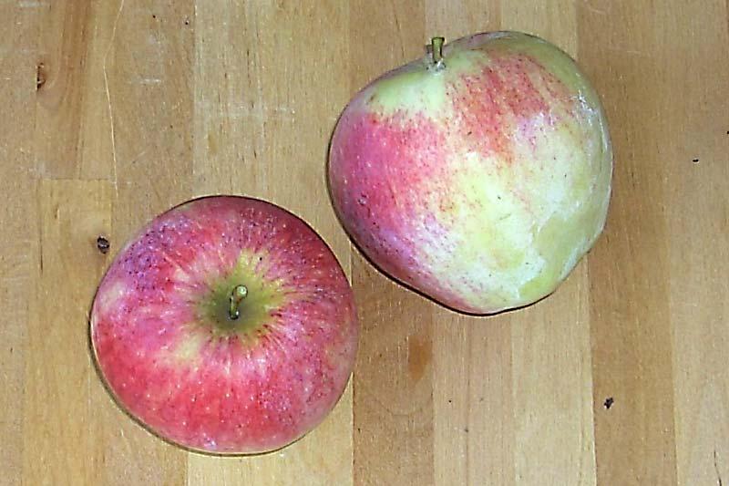 Apfelsorte Reanda