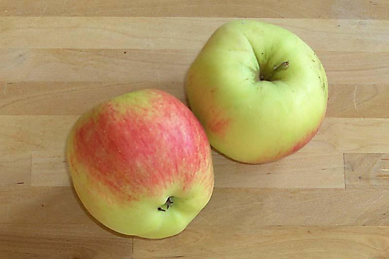 Apfelsorte Reglindis