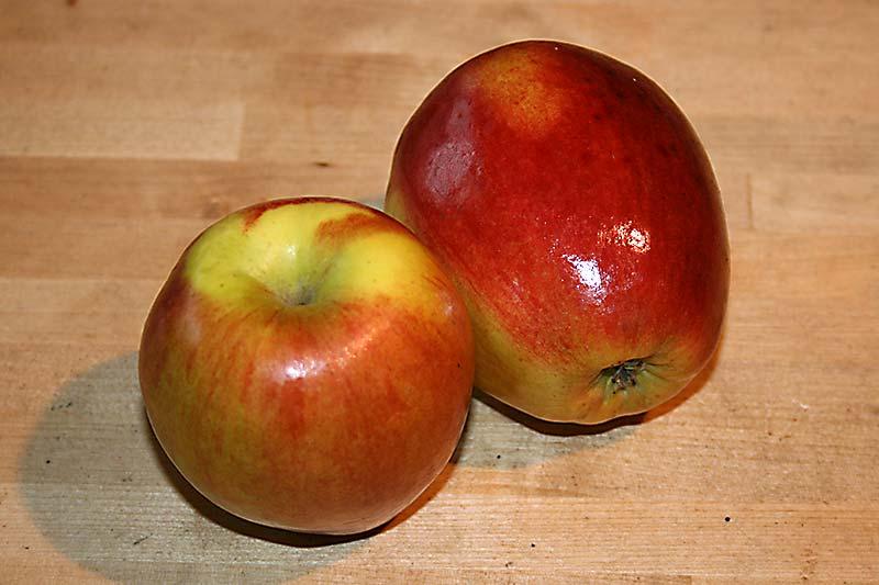 Apfelsorte Rewena