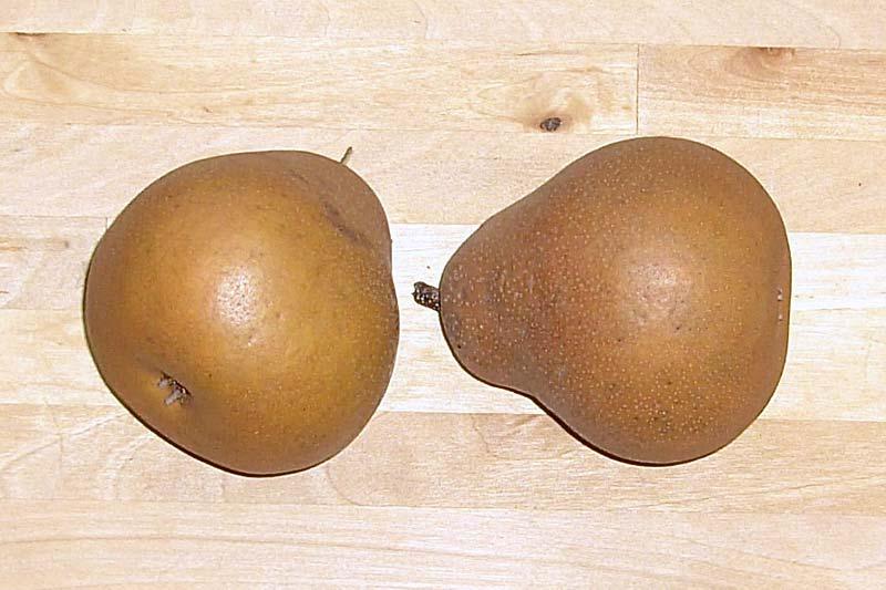 Birnensorte Uta